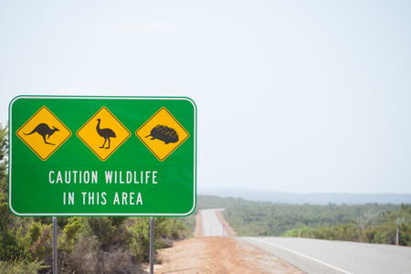 echidna: Wildlife Traffic Warning Sign on highway in remote outback Australia with Kangaroo, Emu and Echidna as icon symbols, blurred background, copy space.