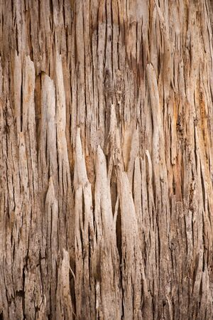 karri: Close Up striped texture and pattern of karri tree eucalyptus bark in Western Australia, nature backdrop, natural wallpaper, copy space.