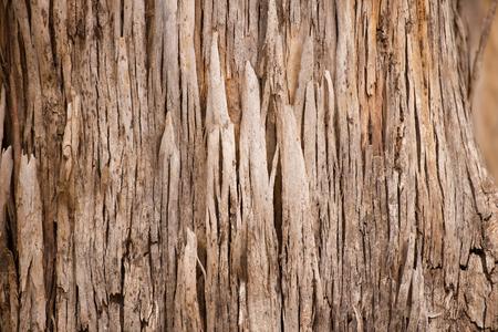 karri: Close Up beautiful texture and pattern of karri tree eucalyptus bark in Western Australia, nature backdrop, natural wallpaper, copy space.