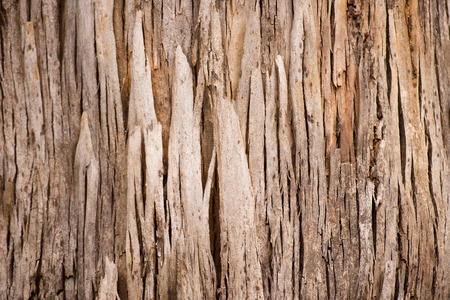 karri: Close Up abstract texture and pattern of karri tree eucalyptus bark in Western Australia, nature backdrop, natural wallpaper, copy space. Stock Photo