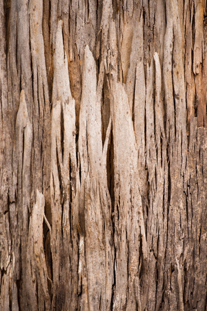 scarred: Close Up scarred texture and pattern of karri tree eucalyptus bark in Western Australia, nature backdrop, natural wallpaper, copy space. Stock Photo