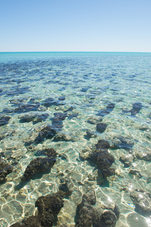 western australia: Scenic view of Stromatolites at Hamelin Pool in Shark Bay, Western Australia.
