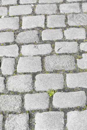 europe vintage: Detailed close up of old historic vintage cobble stone path or road in Europe, grey square pattern and texture with green weed, copy space, backdrop and wallpaper. Stock Photo