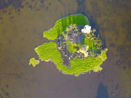 swampland: Scenic vertical Aerial view of lake wetland with green island of reed grass, tranquil clear water, copy space.