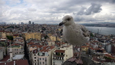 Seagull on the background of the Istanbul Center, Turkey