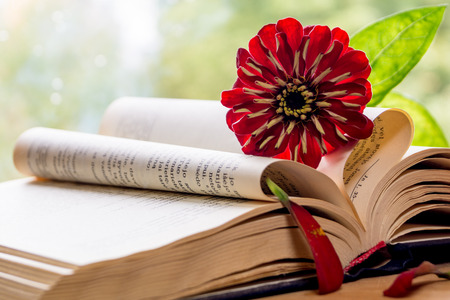 bible flower: Still life with bible and flower