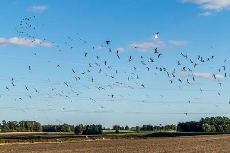 Flock of birds on blue sky Stock Photo