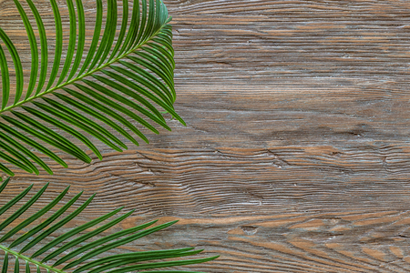Palm branch on an old wooden background with copy space. Stock Photo
