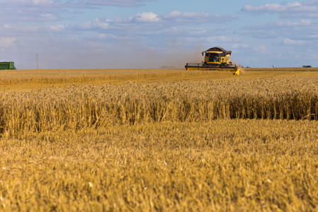 Yellow combine harvester on a wheat field with blue sky. Stock Photo