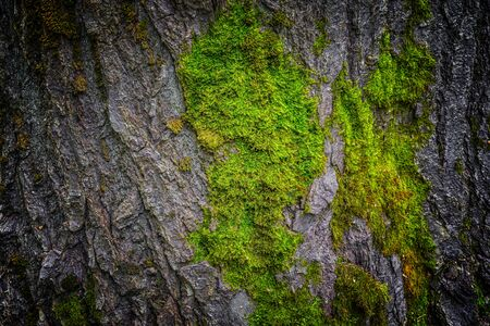 Moss and tree bark texture with natural patterns as background.