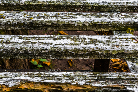 Very old, grunge, rustic wood texture with natural patterns and cracks on the surface as background.