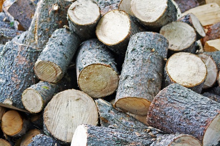 wood cutter: Firewood Stock Photo