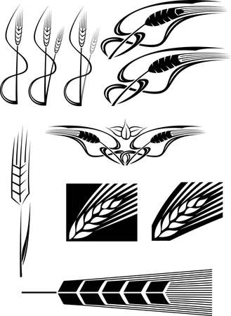 flora vector: Various Wheat icons
