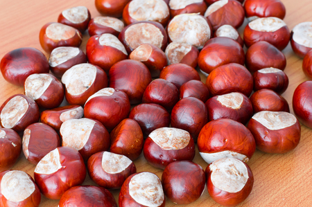 Horse chestnuts.