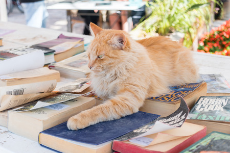 Eilat, Israel - February 9, 2019: Nice cat on the books. Cat at free books for vacation. Library sponsored by Israeli Ministry of Tourism. Editorial