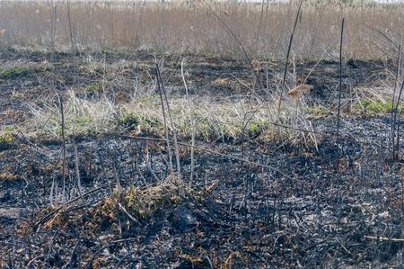 Burn out grass.