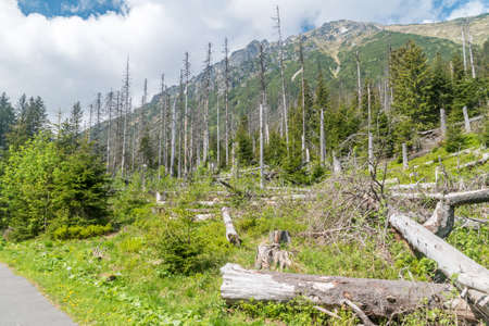 Destroyed forest in Tatra National Park in Poland.