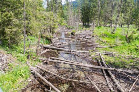 Potok u Lisow stream in Tatra Mountains.