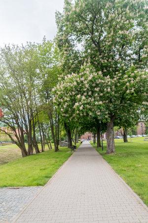 Lubin, Poland - June 1, 2021: Park in city center of Lubin.