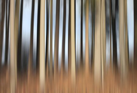 Abstract forest trees with motion blur on sunny winter day.