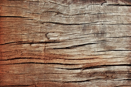 Surface texture of the old rotten wood. Stock Photo - 12715289