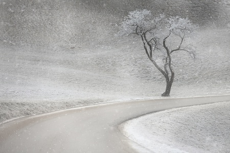 Lonely tree silhouette in first snow with road