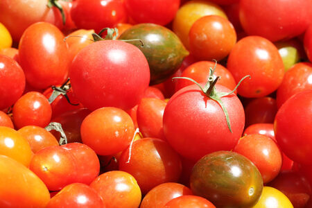 Organic tomatoes for sale in daily market