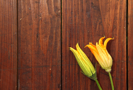 Cukini flower on wooden background