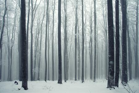 Escena del bosque de hayas con niebla de invierno.