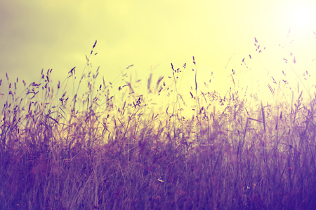 filters: Vintage photo of summer meadow at sunset. Vintage filter effect used. Stock Photo