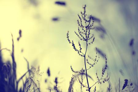 Primavera o verano prado de la vendimia en la puesta del sol. Efecto de filtro utilizado vendimia.