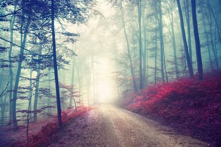 fog forest: Vintage color effect autumn forest road with fantasy light. Vintage filter effect used. Stock Photo