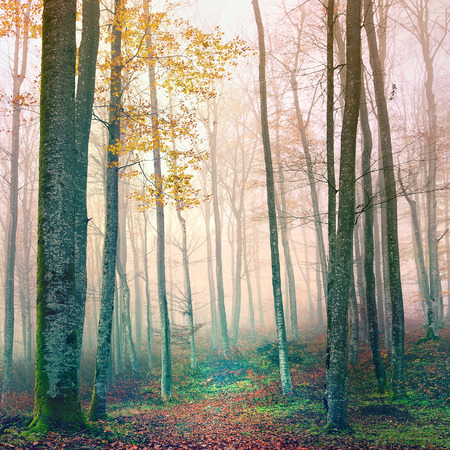dreamy: Path in dreamy autumn forest.