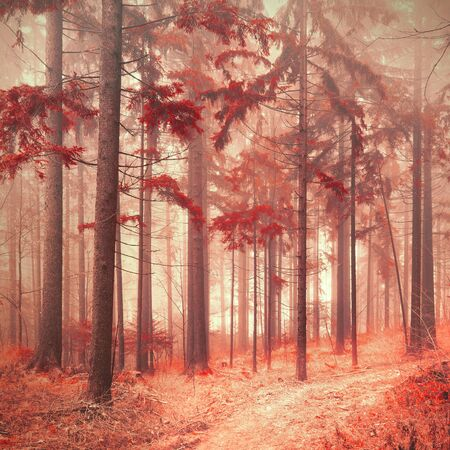 saturated color: Fantasy red color saturated and foggy forest landscape in south east Slovenia, Europe.