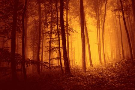 포화 포리스트 포리스트 장면 프리 위에 붉은 색. 사용되는 붉은 색 필터 필터 효과.