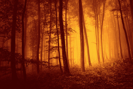 Red color over saturated foggy forest scene landscape. Red color filter filter effect used. Stock Photo
