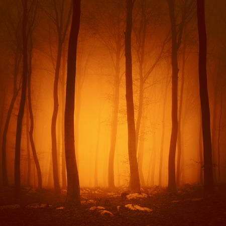 spooky forest: Spooky red saturated color forest scene with yellow orange light in background.