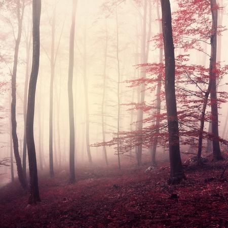판타지 마샬 색상 안개 삼림. 안개 낀 포레스트에서 아름다운 마르 살라 색. 마 르 살라 색이 사용되었습니다.