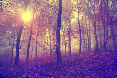 M�stico vintage coloreado escena del bosque de niebla de oto�o con sol. Efecto de color del filtro utilizado.