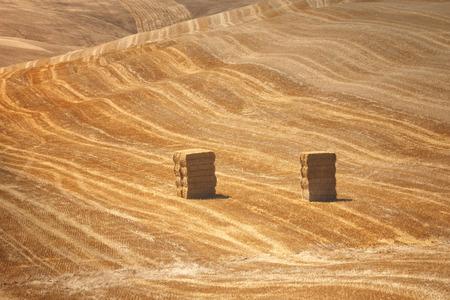 Un campo de granja en el campo lleno de fardos de paja. Campo rural Hermosa soleado patr�n de color dorado con fardos de paja fue tomada en la Toscana, Italia. Foto de archivo