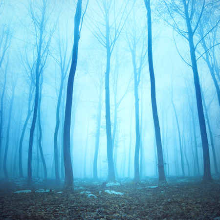 woodland  horror: Magical blue color foggy woodland trees. Beautiful turquoise color in dreamy foggy forrest. Stock Photo