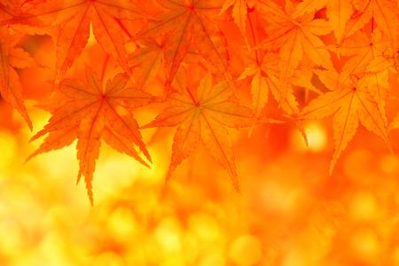 황금 가을 단풍 나무 잎.
