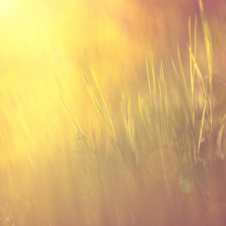 태양 빛을 플레어 추상적 인 황금 색상 빈티지 영적 초원 배경. 빈티지 색상 효과를 사용합니다. 스톡 콘텐츠
