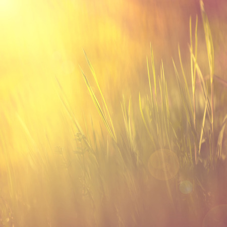 Abstract golden color vintage spiritual meadow background with sun light flare. Vintage color effect used.