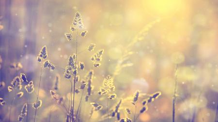 レトロは、フレアと夕日で芝生の草をぼやけています。ビンテージ紫赤や黄色オレンジ色のフィルター効果を使用します。セレクティブ フォーカス 写真素材