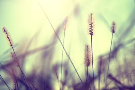 Vintage season blurry meadow in sunset. Vintage filter effect used. Stockfoto