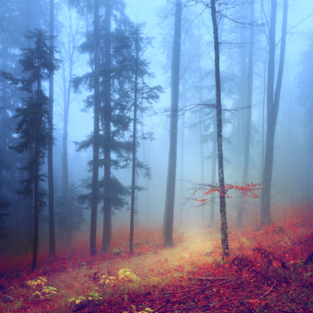 Autumn mysterious forest with pathway. Foto de archivo