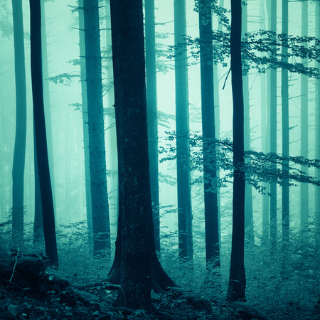 saturated: Fantasy blue color light, foggy forest background. Blue color filter effect used. Lovely dreamy blue saturated woodland.