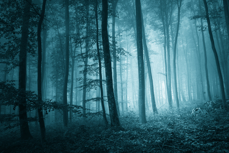 Dreamy mystic blue color in magic foggy forest landscape. Light effect and turquoise color effect added. Archivio Fotografico