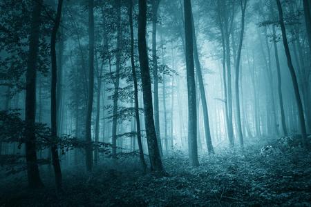 turquesa: de color azul mística de ensueño en el paisaje del bosque de niebla mágica. efecto de luz y efectos de color turquesa añaden.